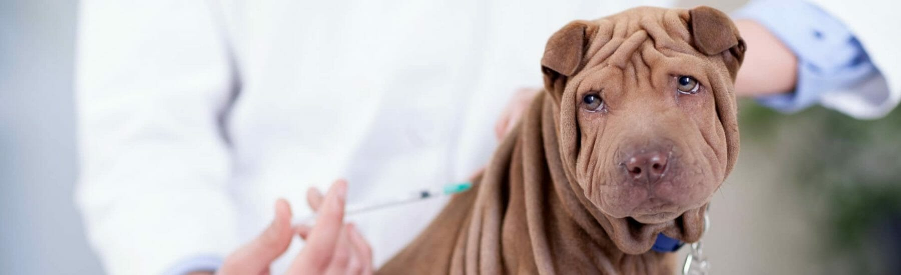 Vaccinations for Puppies and Dogs