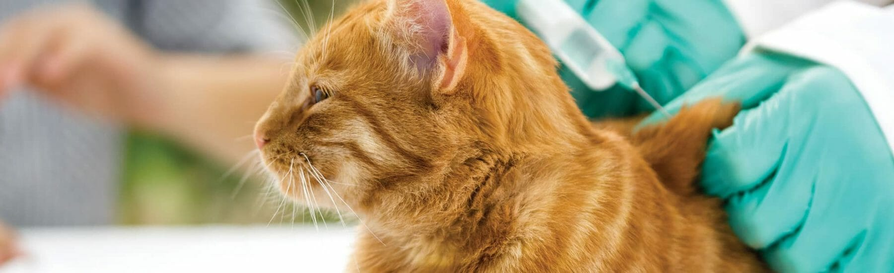 Vaccinations for Kittens and Cats
