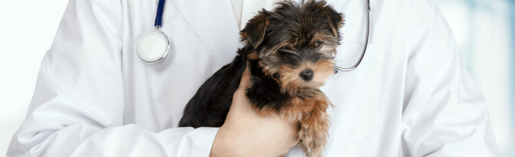 Spay and Neutering Services